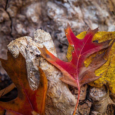 Photograph - Autumn Red And Yellow by Melinda Ledsome