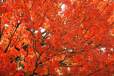 Photograph - Autumn Red by Cora Wandel