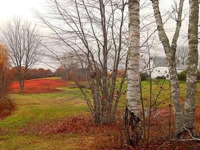 Photograph - Autumn Red Field Maine  by Expressionistart studio Priscilla Batzell