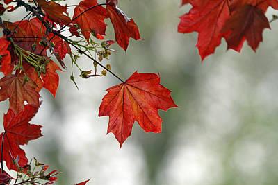 Autumn Red Art Print by Karol Livote