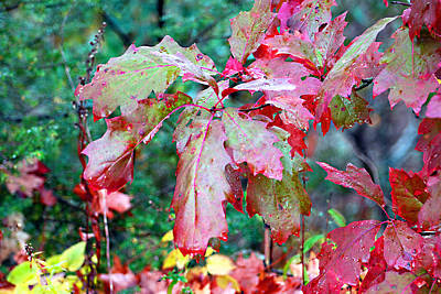 Photograph - Autumn Red by Linda Cox