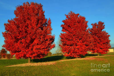 Maple Leaf Art Photograph - Autumn Red by Luther Fine Art