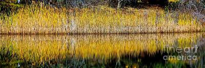 Photograph - Autumn Reed Reflection by Patrick Witz