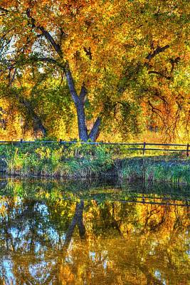 Photograph - Autumn Reflecting by Diane Alexander