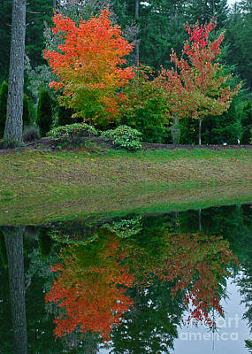 Photograph - Autumn Reflection by Chuck Flewelling