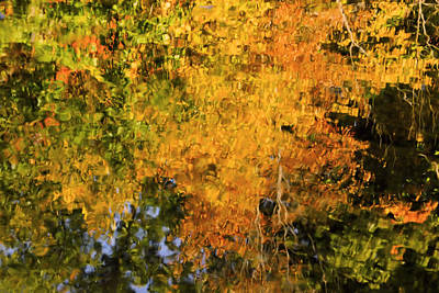 Autumn Reflection Art Print by Michelle Joseph-Long