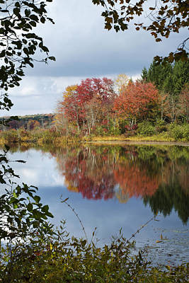 Photograph - Autumn Reflection Through The Trees by Christina Rollo