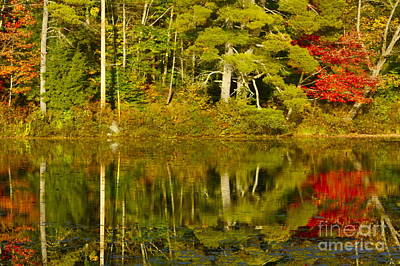 Art Print featuring the photograph Autumn Reflections by Alice Mainville