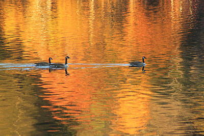 Photograph - Autumn Reflections And Canada Geese by John Burk