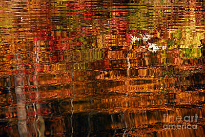 Photograph - Autumn Reflections And Leaves by Larry Ricker
