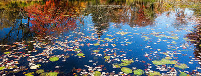 Lilly Pad Photograph - Autumn Reflections by Bill Wakeley