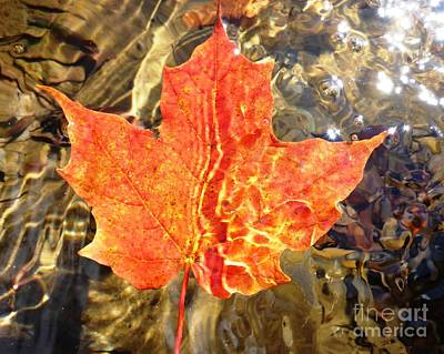 Photograph - Autumn Reflections by Cristina Stefan