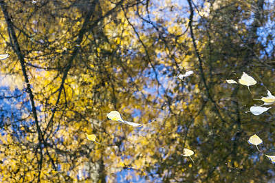 Photograph - Autumn Reflections by Dana Moyer