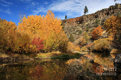 Photograph - Autumn Reflections In The Susan River Canyon by James Eddy