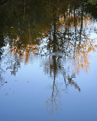 Photograph - Autumn Reflections by Rhonda McDougall
