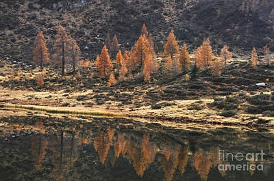 Photograph - Autumn Reflections by Simona Ghidini