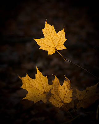 Photograph - Autumn Remnant by Bill Pevlor
