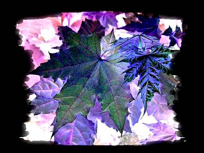 Maple Leaf Art Digital Art - Autumn Reverie by Will Borden