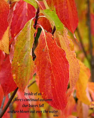 Photograph - Autumn by Rhonda McDougall