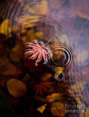Autumn Ripples Art Print by Mike Reid