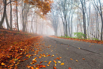 Danube Photograph - Autumn Road by Evgeni Dinev