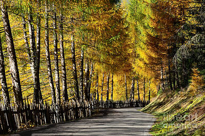 Photograph - Winding Road Through The Autumn Trees by IPics Photography