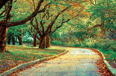 Photograph - Autumn Road by Milan Kalkan