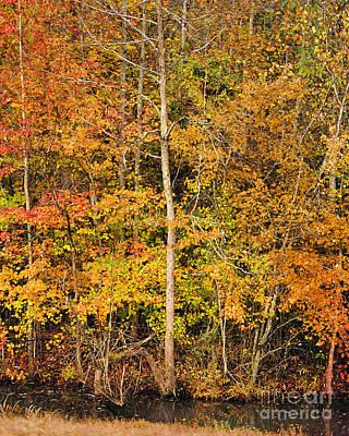 Autumn Scene Photograph - Autumn Roadside Stream by Jai Johnson