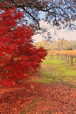 Photograph - Autumn Rush by Michael Hope