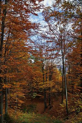 Photograph - Autumn Scene II by Bogdan M Nicolae