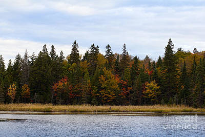 Photograph - Autumn Scene In Algonquin Park by Les Palenik
