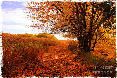 Autumn Scenery Art Print by Sophie Vigneault