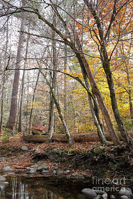 Photograph - Autumn Seclusion by Todd Blanchard