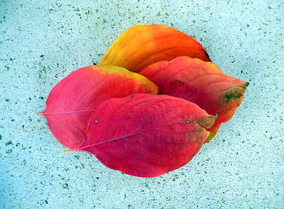 Photograph - Autumn Sedona Leaves by Marlene Rose Besso