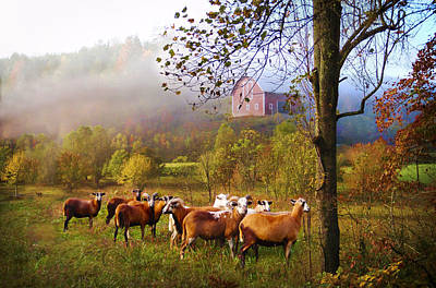 Autumn Sheep Art Print by Debra and Dave Vanderlaan