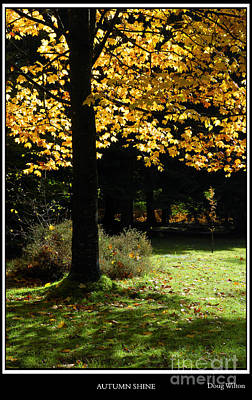 Dappled Light Photograph - Autumn Shine by Wendy Wilton