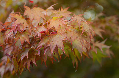 Photograph - Autumn Showers 4 by Fraida Gutovich