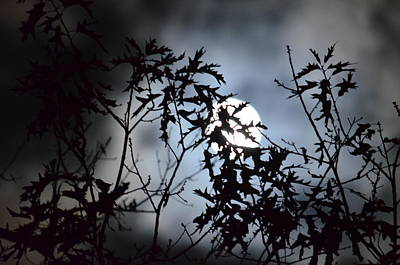 Photograph - Autumn Silhouettes 2013 by Maria Urso