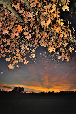 Autumn Sky And Leaves 1 Art Print