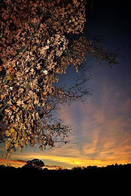 Autumn Sky And Leaves 2 Art Print