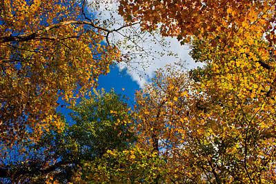 Autumn Sky Art Print by Claus Siebenhaar