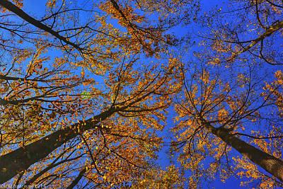 Photograph - Autumn Sky by Kathi Isserman