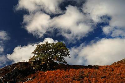 Just Desserts - Autumn skyline by Gavin Macrae