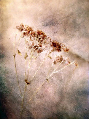 Photograph - Autumn Snakeroot by Louise Kumpf