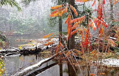 Rhus Photograph - Autumn Snow Cranberry River by Thomas R Fletcher