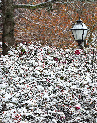 Photograph - Autumn Snow by Michelle Wiarda-Constantine