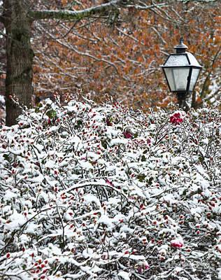 Photograph - Autumn Snow by Michelle Constantine