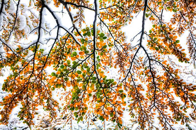 Photograph - Autumn Snow by Roman St