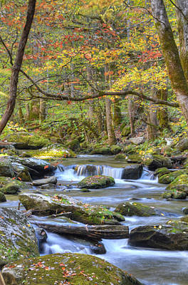 Photograph - Autumn Solitude by Mary Anne Baker