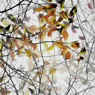 Branch Wall Art - Photograph - Autumn Song by Gilbert Claes